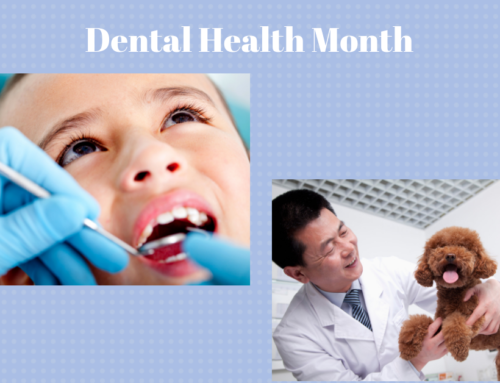 4 Ways to Grow Your Practice During Dental Health Month